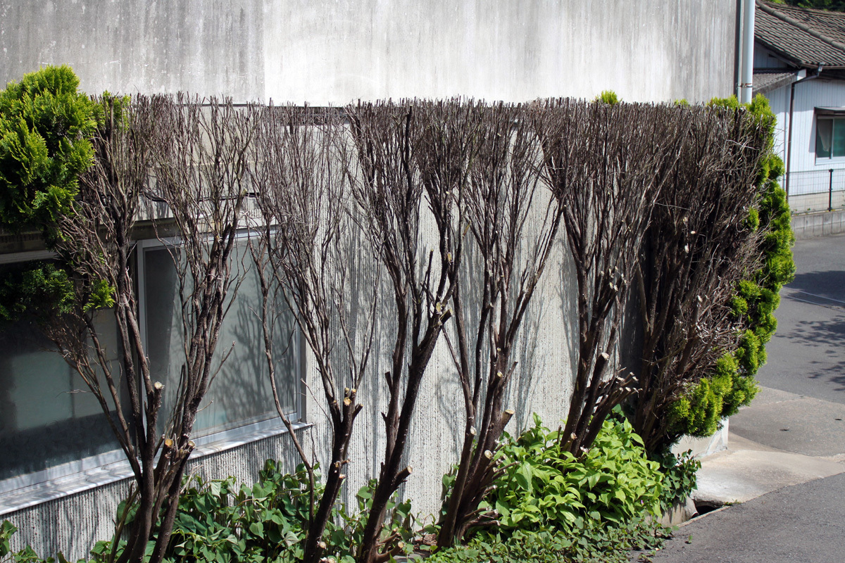 角刈りキャラの木